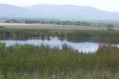 Изключват земя от горския фонд за изграждане на път край Созопол 1