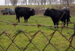 Оборен режим за отглеждане на животните в общината 1
