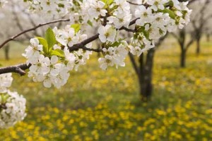 Теодора Стефчева: Пролетно въодушевление 2