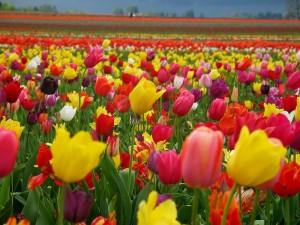 Днес е Цветница! Празнична програма в Созопол 5