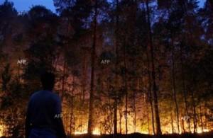 Проект за превенция на горските пожари в общината 16