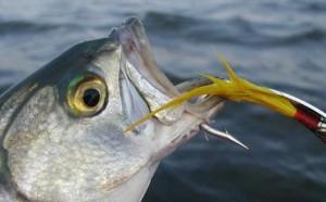Забраняват любителския риболов от днес 2