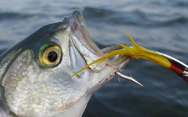Забраняват любителския риболов от днес 1