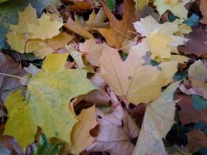 Thumbnail image for Паскал Кюмурджиев – Созополска есенна импресия