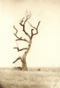 Thumbnail image for Сухото дърво край нос Колокита, Созопол